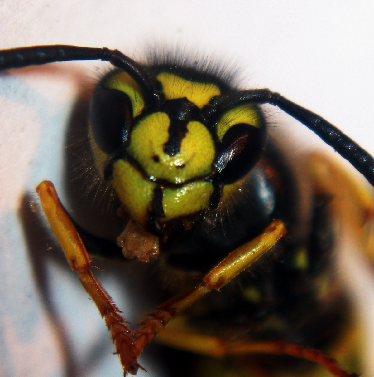 Wasp-Nest-Removal-Guildford